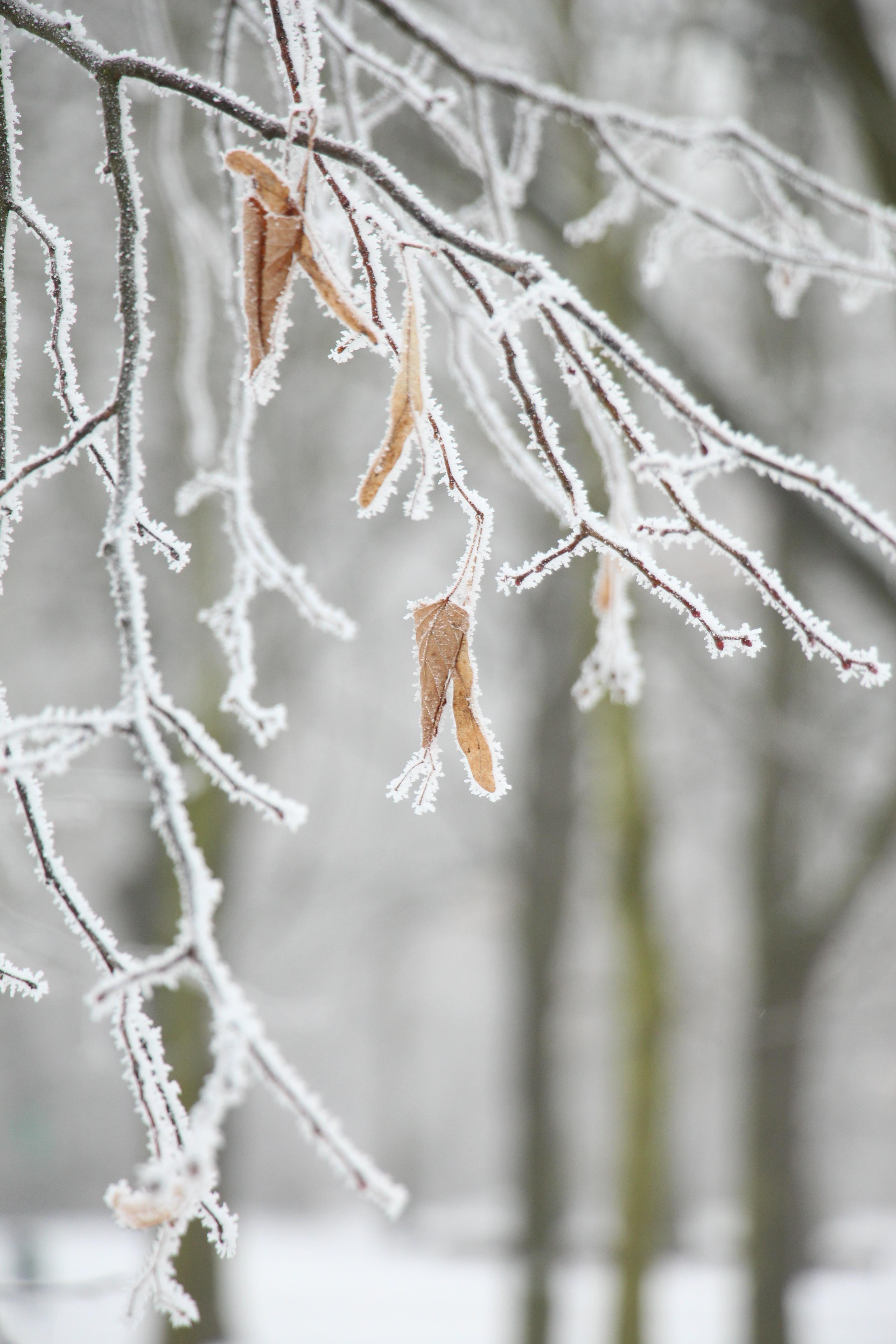 Öko-Weihnachtsbäume für weniger Gift im Wohnzimmer